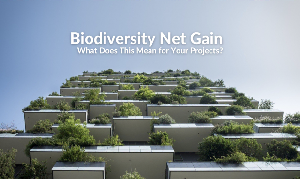 Biodiversity Net Gain – What Does This Mean for Your Projects?
