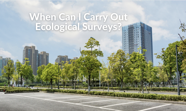When Can I Carry Out Ecological Surveys?