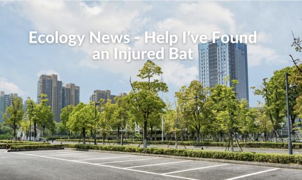 Ecology News – Help I've Found an Injured Bat